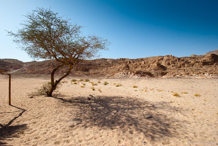 Одиноко или одиночно стоящее дерево?