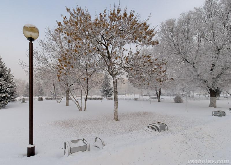 Фонарь, скамейка, дерево - мороз...