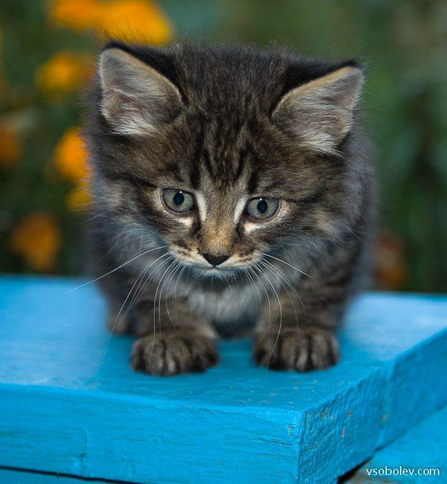 Свежие котики с доставкой самовывозом