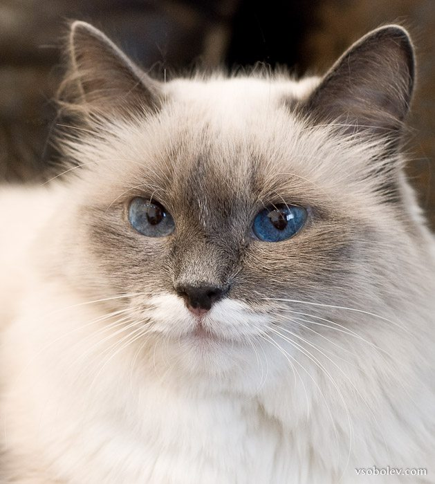 emma-cat-3