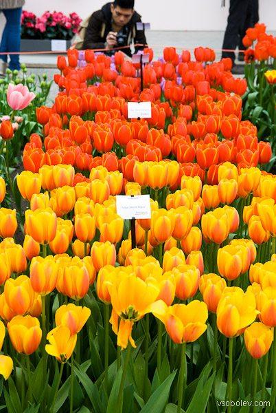 flowers-amsterdam-11