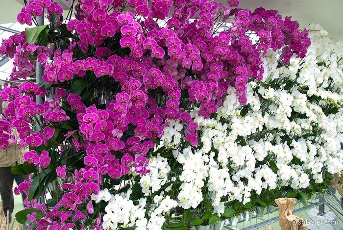 flowers-amsterdam-18