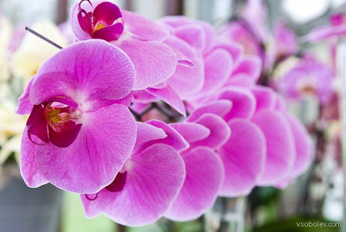 flowers-amsterdam-23
