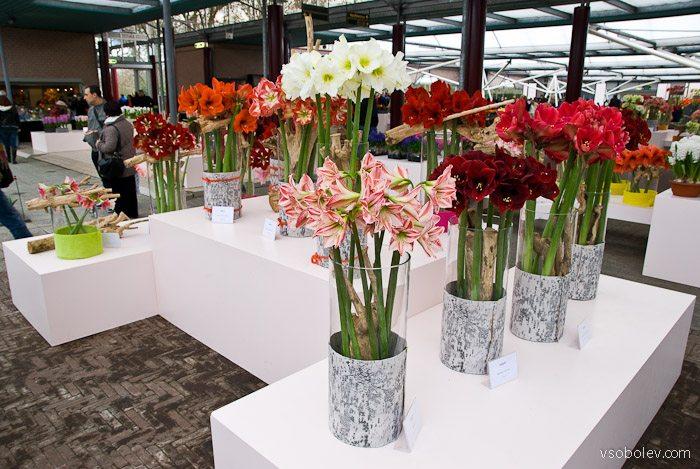 flowers-amsterdam-4