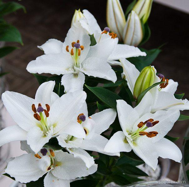 flowers-amsterdam-5