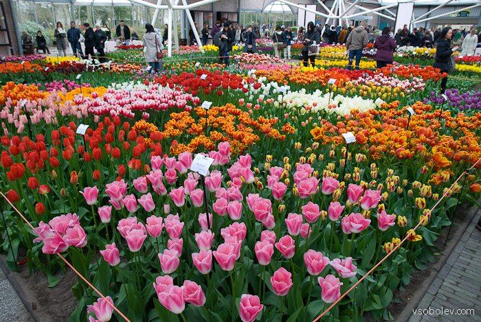 flowers-amsterdam-6