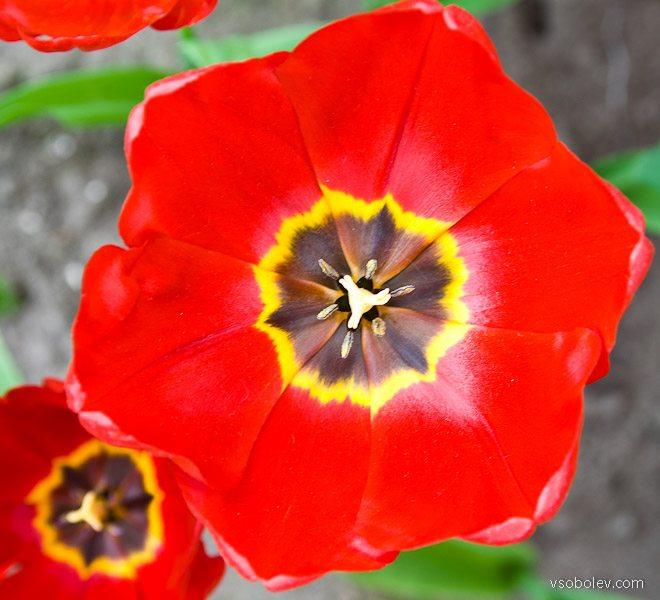 flowers-amsterdam-8