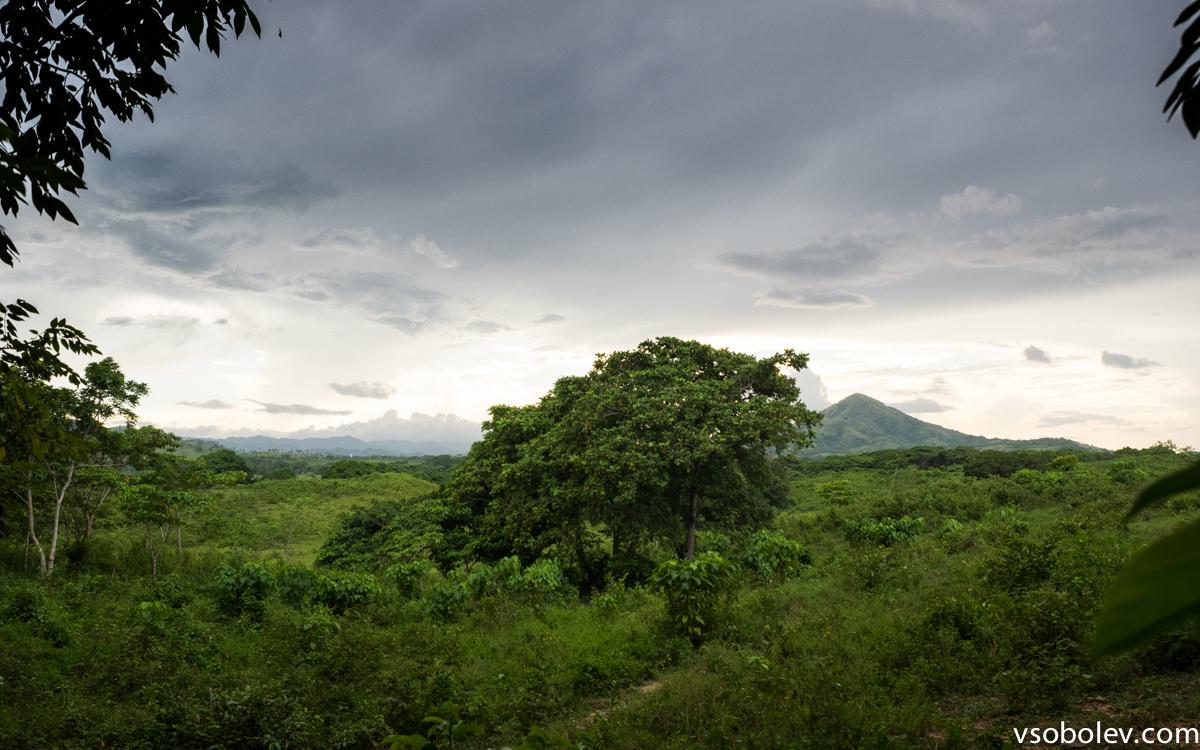 Гора Редонда справа от дерева