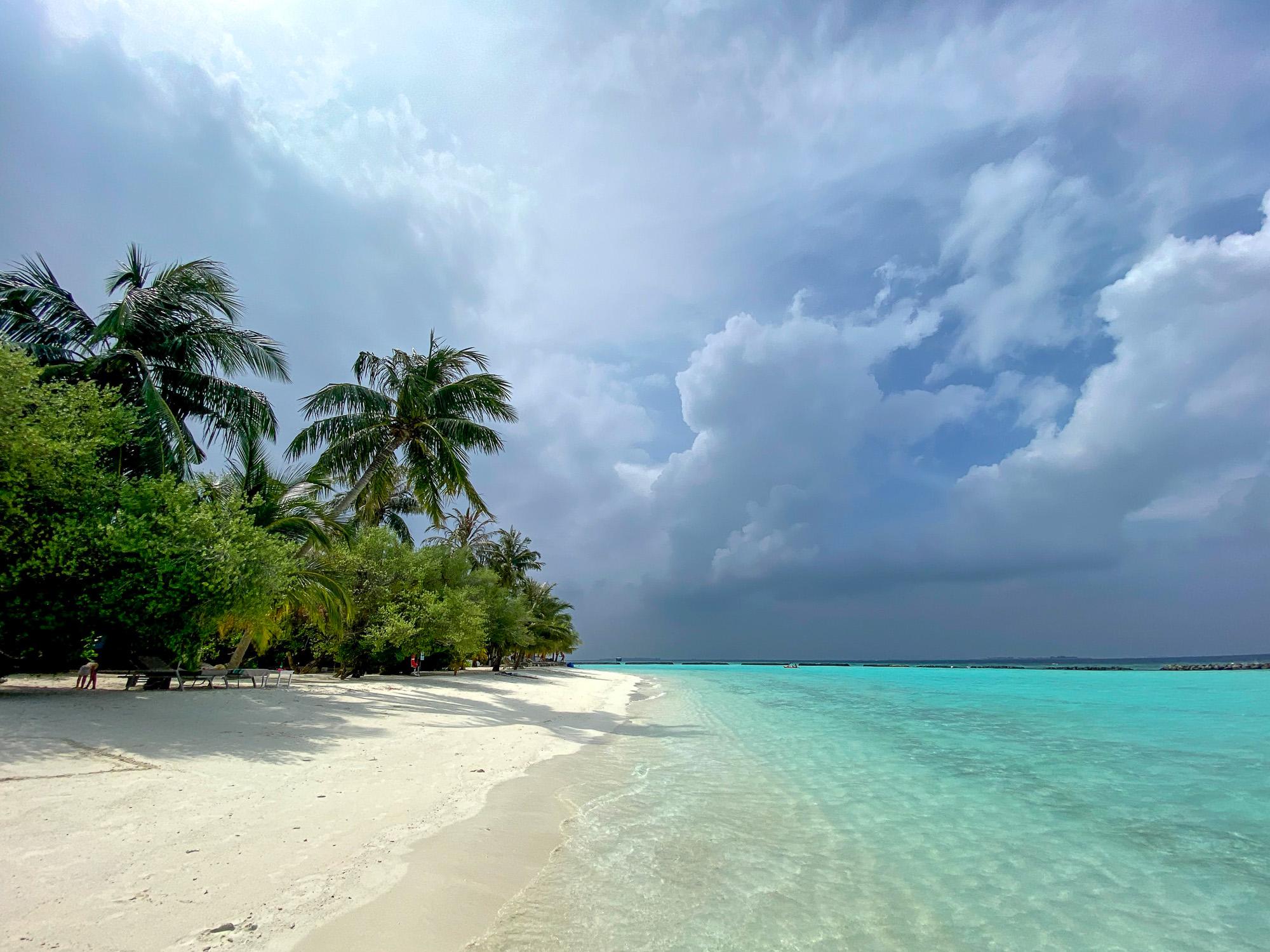 Пальмы Курамба Мальдивы 2021