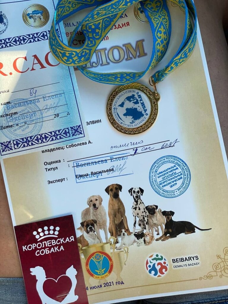 выставка собак в Нур-Султане