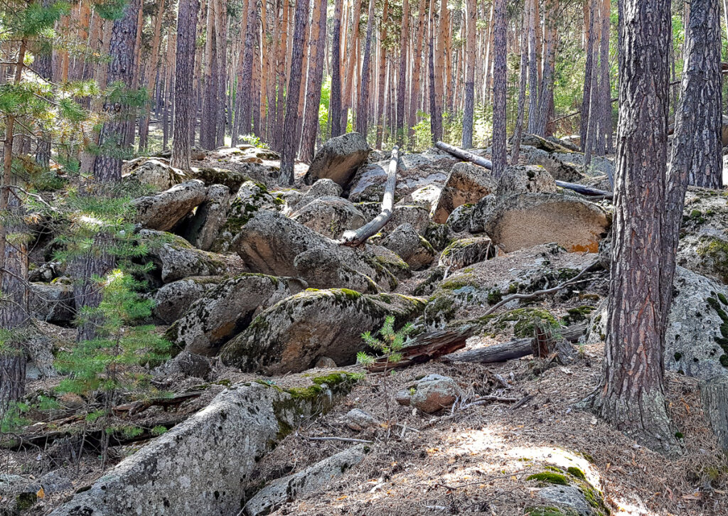 Лес и горы Каркаралинск