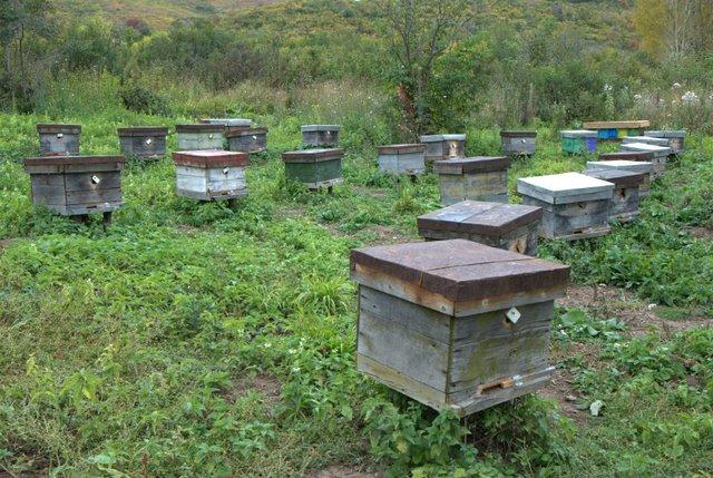 Пчеловодство в Восточном Казахстане